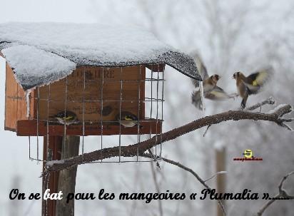Mangeoire 5941_Plumalia