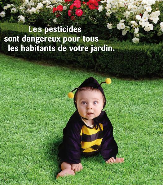 Pesticide Plumalia