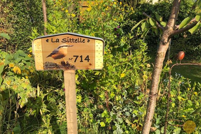 Sittelle La Bourgonce 7 Plumalia